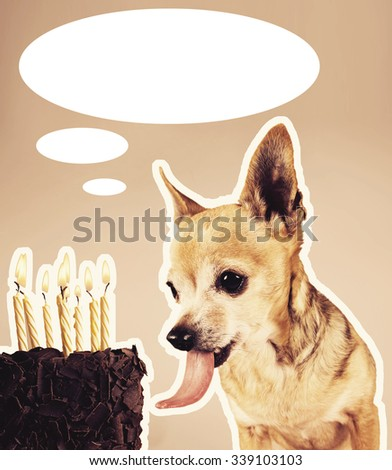 a chihuahua licking a piece of birthday cake with candles on top and a speech or thought bubble above for text isolated on a brown background - stock photo