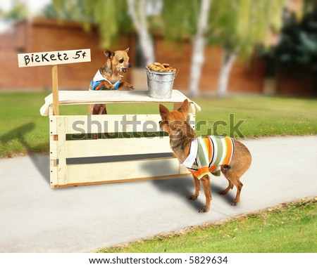 a chihuahua with a biscuit stand - stock photo