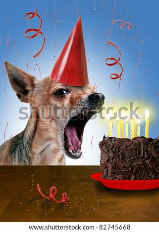 a chihuahua with a piece of cake - stock photo