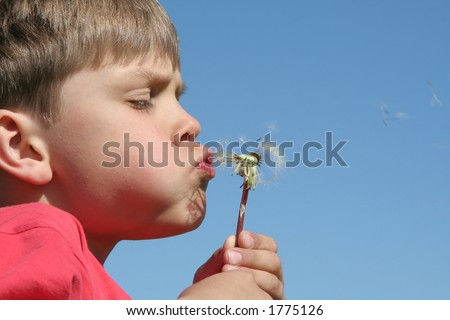 A child blowing dandelion's seeds - stock photo