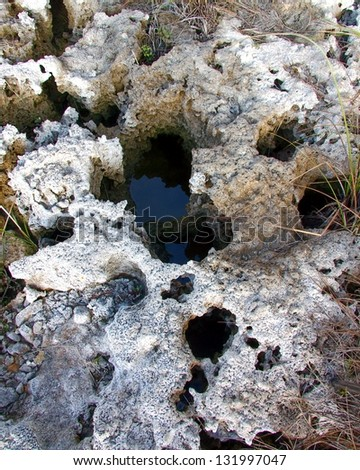 A clear close up view of the Coral rock or limestone foundation in the Everglades National Park - stock photo