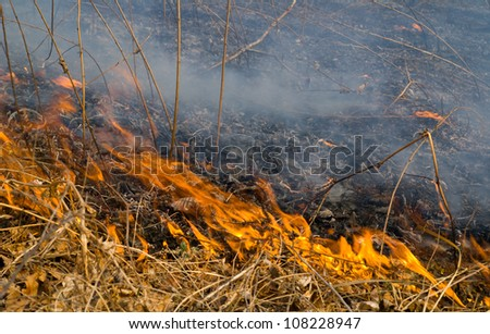 A close-uo of the flame of brushfire. - stock photo