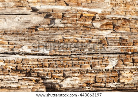 A close up background view of a section of driftwood rotting on a beach in the San Juan Islands. - stock photo