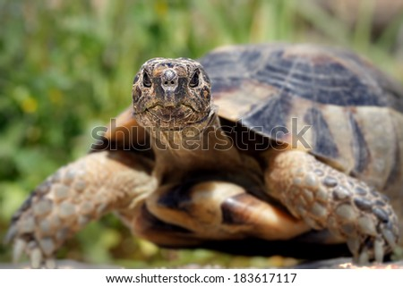 A close up from a small tortoise facing - stock photo
