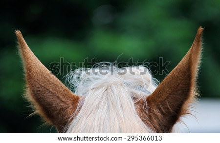 A close up images of the ears of a bay horse. - stock photo