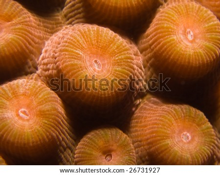 A close up macro view of coral underwater on a tropical reef - stock photo