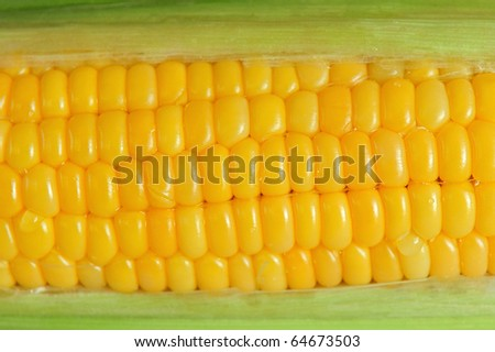 A close up of a cob of corn - stock photo