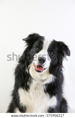 A close up of a dog sitting looking at the camera - stock photo