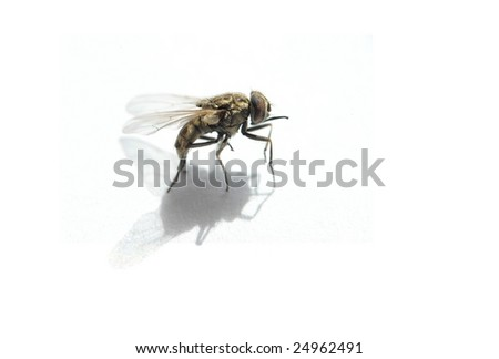 A close-up of a house fly. - stock photo