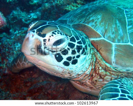 A close up of a sea turtle during my holidays in borneo - stock photo
