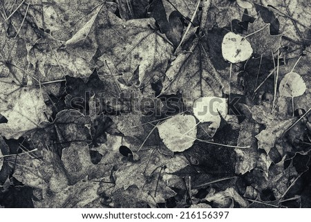 A close up of decomposing fall leaves on the ground of a rural forest.  Processed in black and white and lightly.  - stock photo