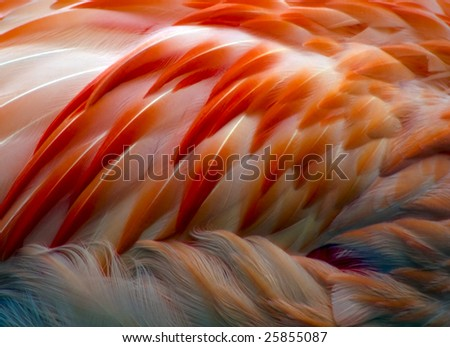 A close-up of the beautiful pink feathers of a flamingo. - stock photo