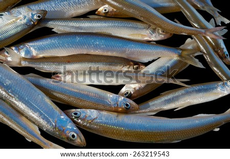 A close up of the small fishes (Smelt). Isolated on black. - stock photo