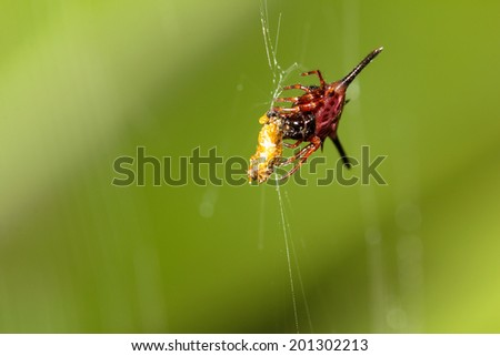 A close up of the spider on spider-web - stock photo