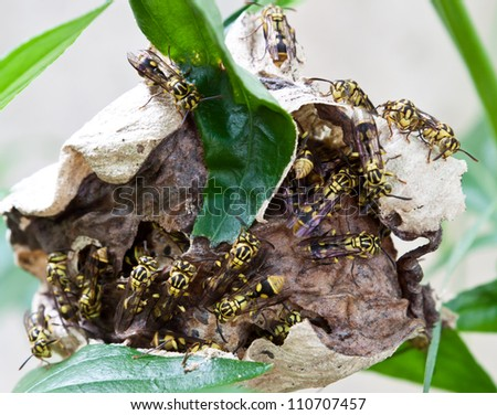 A close up of the wasps on comb - stock photo