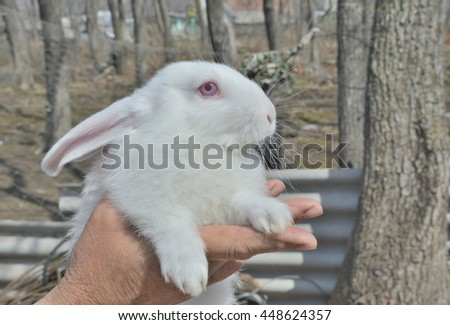 A close up of the young white rabbit on hands. - stock photo