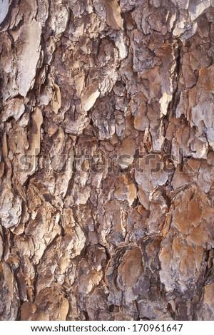 A close up of tree bark texture. - stock photo