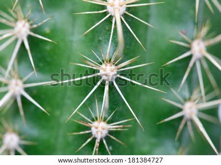A close up photo of nice specimen of cactus - stock photo