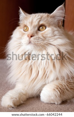 A close-up portrait of a gorgeous cat (feline catus). - stock photo