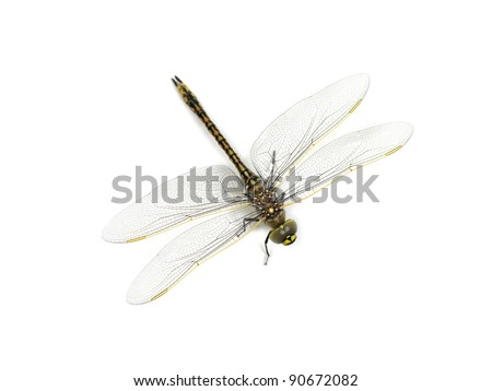 A close up shot of a dragon fly on white - stock photo