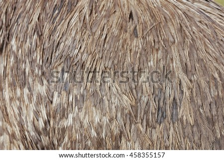 a close up view of emu feathers - stock photo