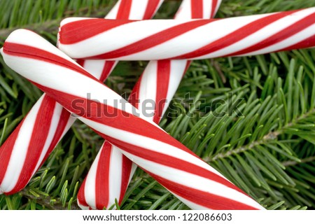 A close view of several pieces of red and white peppermint candy sticks on fresh pine boughs. - stock photo