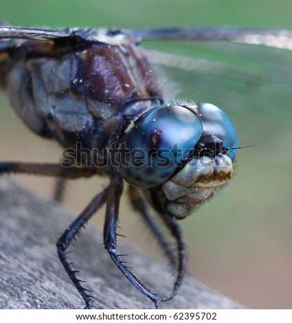 A closeup macro of a dragonfly for your use in anything you may need. - stock photo