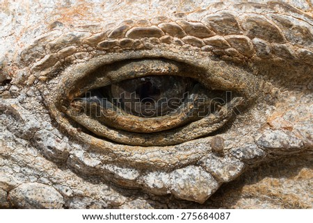 A closeup of a rhinoceros iguana's eye, Oviedo lagoon, Dominican Republic - stock photo