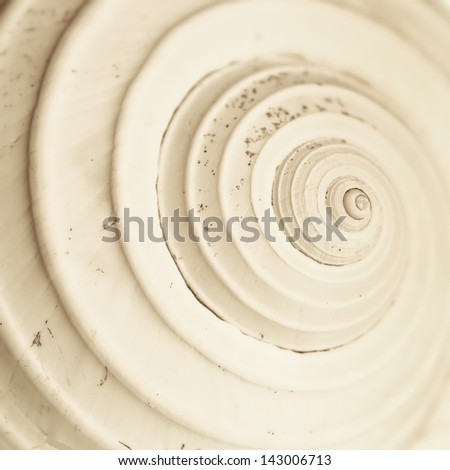 a closup of a snail seashell's spiral - stock photo