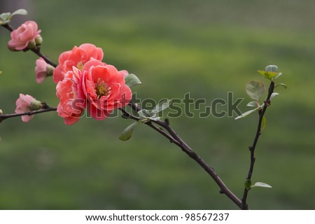 A cluster of red flowers in front of soft green background - stock photo