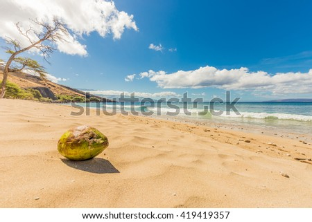 A Coconut Sits on the Beach on a Tropical Island - stock photo