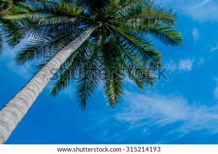 A Coconut tree and blue sky. - stock photo