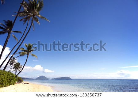 A coconut tree, sands, the blue sea, white clouds,  Waialae Beach, Oahu, Hawaii, horizontal position-2 - stock photo