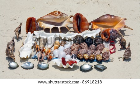 A collection of beautiful seashells in Zanzibar - stock photo