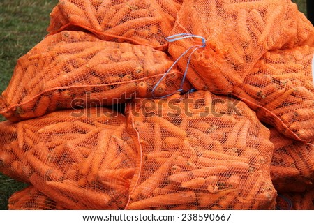 A Collection of Netting Sacks Holding Fresh Carrots. - stock photo