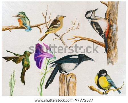 A collection of painted birds - known species from around the world. (Painting with acrylic paints.) - stock photo