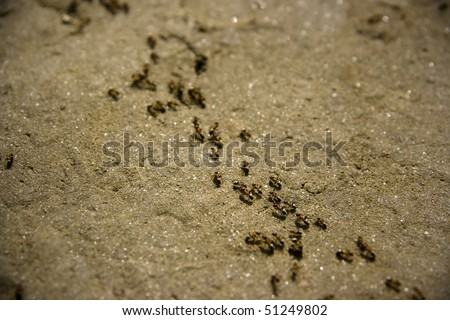 A colony of ants marching across the sand. - stock photo