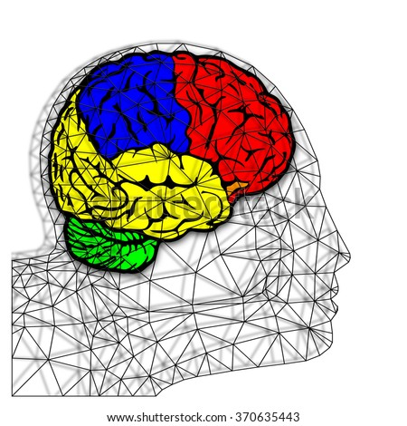 A colorful brain inside a wire frame human head.  - stock photo