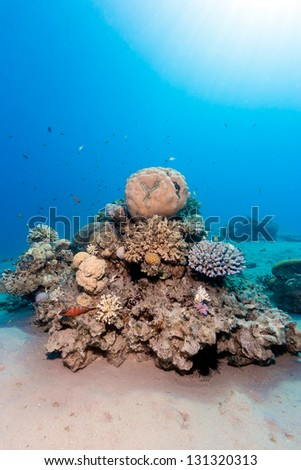 A colorful hard coral pinnacle on a tropical reef - stock photo