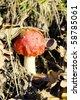A colorful mushroom among fallen leaves - stock photo