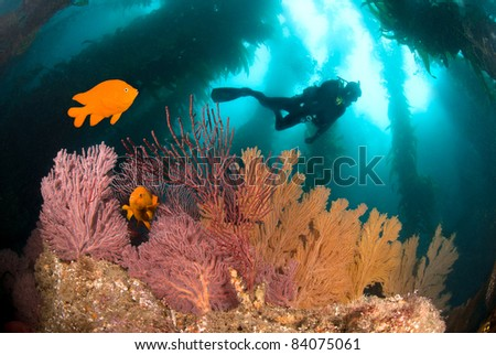A colorful underwater reef with a scuba diver and orange fish. - stock photo