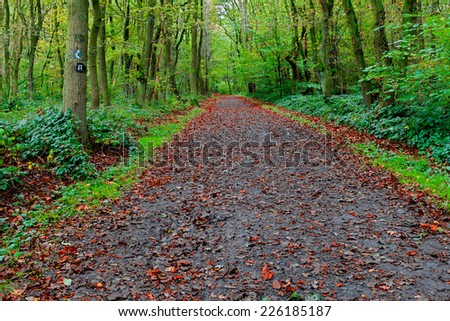 A colourful vibrant image of a hiking trail in the woods with fallen red leaves as autumn fast approaches - stock photo