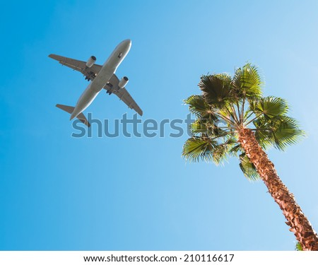 A commercial jet taking off over a palm tree - stock photo