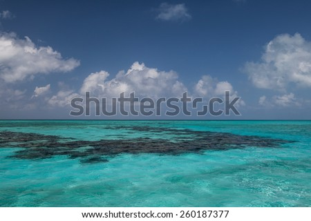 A coral reef grows in the shallows of Lighthouse Reef near the famous Blue Hole in Belize. This World Heritage Site is also includes Halfmoon Caye, an important frigate and booby nesting site. - stock photo