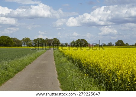 A country lane with some trees, a blossoming yellow colza field and a fade blue sky with white clouds taken at bright sunshine. - stock photo