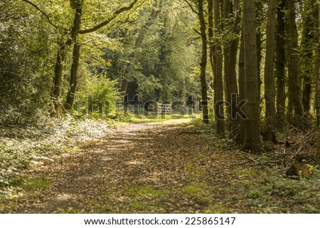 A country path surrounded by trees with a wooden gate as the focal point in the distance - stock photo