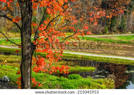 A country road by a lake and maple tree with vibrant red leaves during the autumn season.  - stock photo