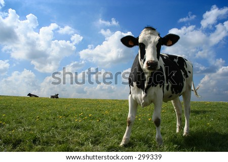 A cow in a pasture with cloudy blue sky at the background - stock photo