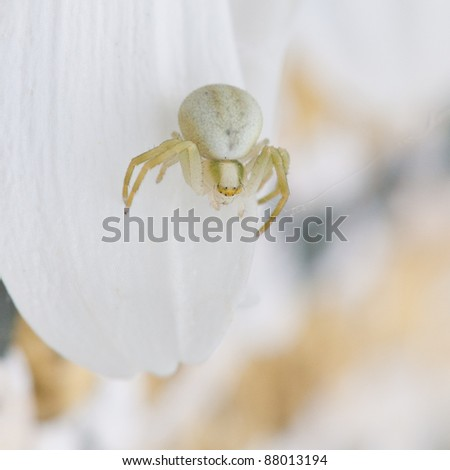 A crab spider hides in plain sight. - stock photo