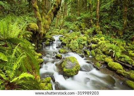 A creek through lush rainforest in the Columbia River Gorge, Oregon, USA. - stock photo